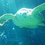 Foto de ABQ BioPark Aquarium