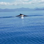 Townsville Whale Watching