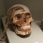 Foto de Didactic Museum Antonini (Museo Antonini)