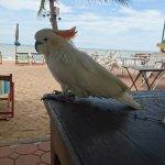 Sea Falcon Hotel Foto