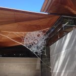 John Ward Knox 'Hardly Held Lightly' - giant spider webs made from chains