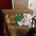 Old fashioned sticky carpets, dusty teddies and rude angry staff. Cats in dining area sitting on