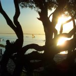 La vegetacion integrada a la playa permite disfrutar en familia