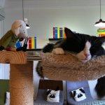 Cat Cafe Neko no Niwa Photo