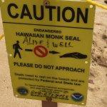Volunteers protect the Monk Seals