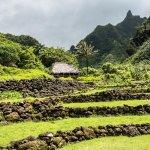 ancient taro gardens at Limihuli