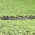 Wood ducks and turtle sunning along the Armory Canal Trail