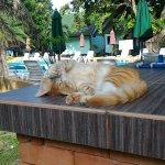 Foto de Andaman Beach Resort