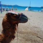 Camel Beach -----Boat Trip