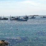 Foto de Cape Porpoise Lobster CO