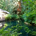 Treehouse Point: view from Upper Pond