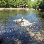 Mountain Springs Trout Park