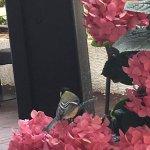Flores en la terraza desayunador