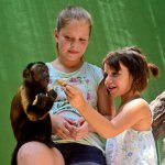 Akumal Monkey Sanctuary and Rescued Animals