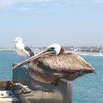 Photo de Comfort Suites Oceanside Marina