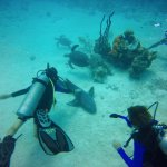 Too cool. Getting to pet a friendly nurse shark and see 3 sea turtles all in one dive!