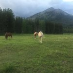 Some of the horses on the ranch