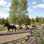 Moose Head Ranch horses