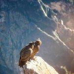 Foto de Condor's Cross
