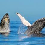 Whale Watch Tahiti