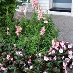 plants outside hotel room door