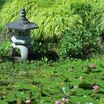 Dinner Bay Japanese Garden
