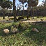 Disney's Animal Kingdom Villas - Kidani Village Foto