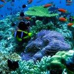 Watersport: go snorkeling