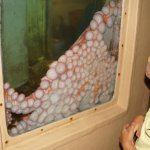 Morro Bay Aquarium Foto