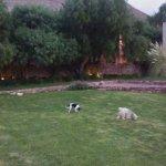 Patio: aqui Julia y chulo, el jardin muy bien cuidado hermoso para leer o tomar unos mates