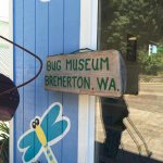 The Bug Museum in Bremerton
