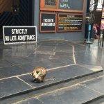 Prithvi Theatre Foto