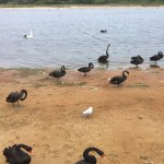 ภาพถ่ายของ Allambi Holiday Apartments Lakes Entrance