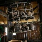 Annah Rais Longhouse Adventure Aufnahme