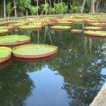 l'étang des nénuphars géants