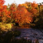 The Nubi in the Fall