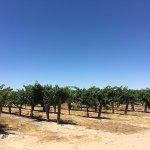 Photo de Wine Wrangler - Day Tours