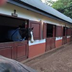 Stables - optional horse riding