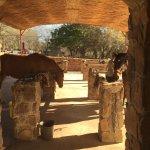 Horizon Horseback Adventures Lodge Foto