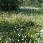 Beautiful wild flower meadows