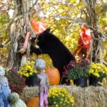 Fall decorations, the bear was real