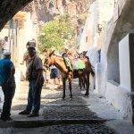 Foto de Santorini Donkey Tours