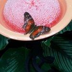 Cockrell Butterfly Center; Butterfly on a sponge