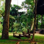 monkeys playing on the swing