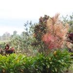 Arenal Kioro Photo