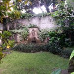 Kodok 2 garden