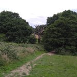 One of the things interesting about the Heath is that they don't cut down the dead trees.