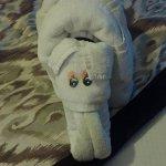 Towel elephant our final night