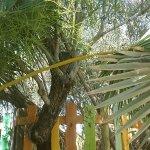 Foto de Apartamentos El Palmeral de Madaria
