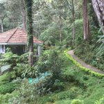 Bilde fra The Tall Trees Munnar